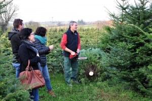 29 : Gouesnach - Vente de sapins de Noël naturels Nordmann