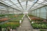 49 : Sainte-Gemmes-sur-Loire - Marché de printemps : un large choix de végétaux