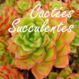 Foire aux Cactées, Succulentes et Plantes tropicales