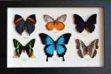 'Les Plus Beaux insectes du Monde' Animation//Exposition/Vente